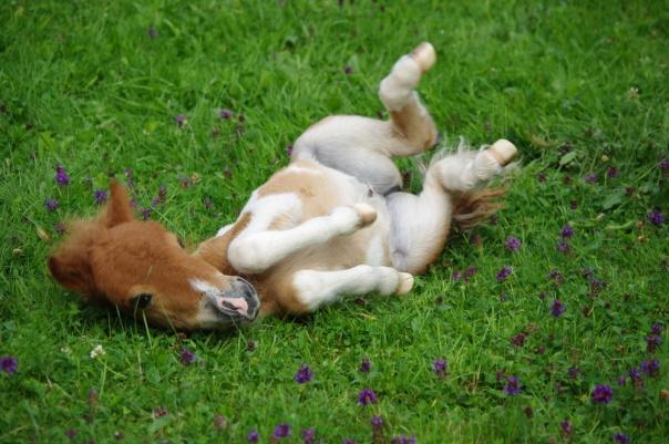 animal-baby-animal-baby-pony-cute-foal-Favim.com-345532
