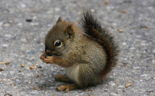 blissfully-cute-baby-animals-baby-squirrel-6