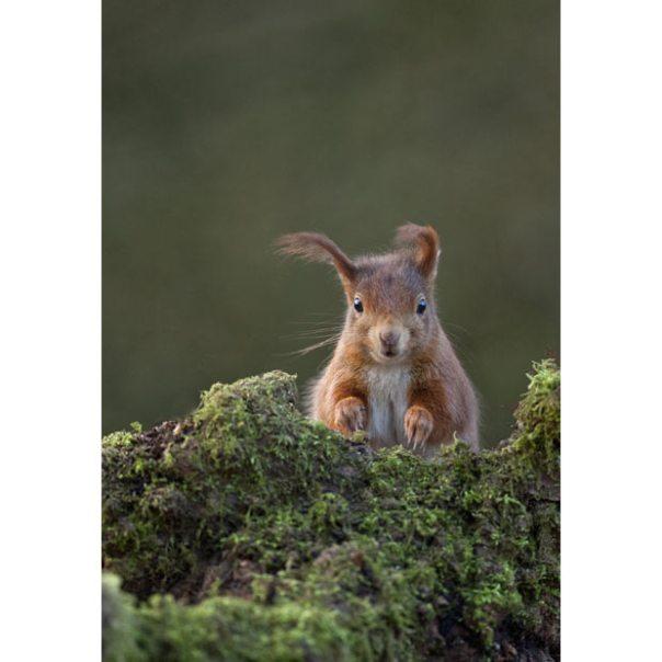 squirrel-wind_2007281i