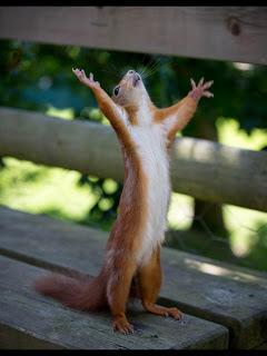 squirrel happy
