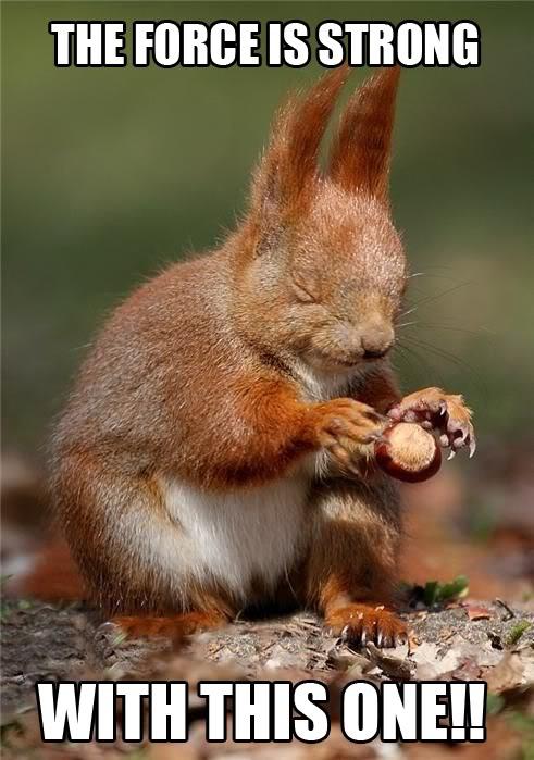 forece-squirrel-meme