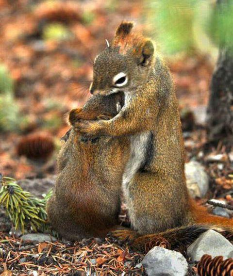 hugging_squirrels_by_cuttie687-d4qaeiz