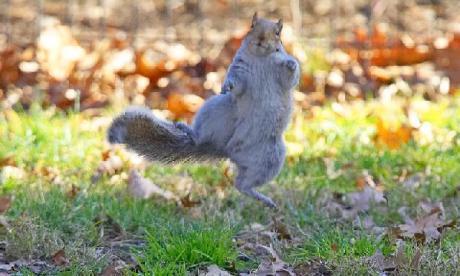 dancing_squirrel