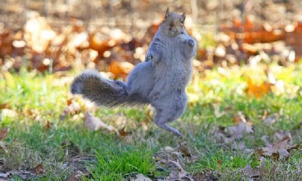 dancing_squirrel
